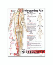 Reference Chart - Understanding Pain