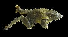 """5"""" - 6"""" Triple Bullfrog Pail"""