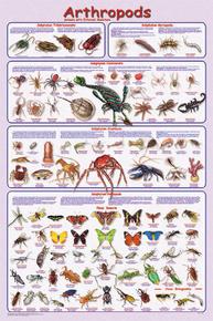 Display Chart - Arthropods
