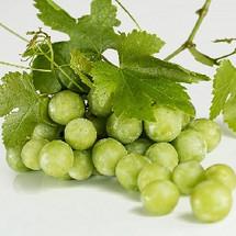 Queen Grapes (MB)