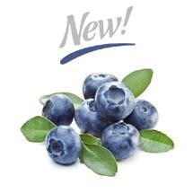 Blueberry Extra (CSL)