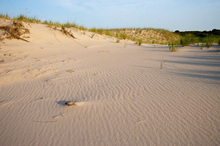 Wind Pattern in the Sand Dunes