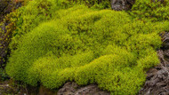 Plant Live Moss to Enhance Any Garden