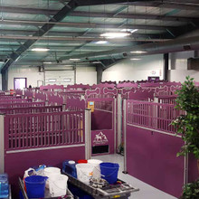 Large dog Kennel boarding facility.