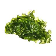 8 oz CleanSea Lettuce (Ulva Lactuta) - Algae Barn