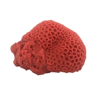 "Brain Coral Orange (7.7"" x 5.6"" x 3.5"") - Large - Weco"