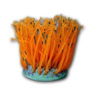 Goniopora Lobata (Pink/Orange) Decoration - AZOO