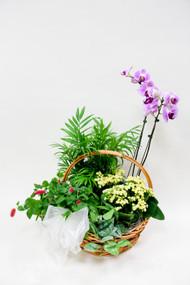 Earle's Sympathy plant dish garden basket