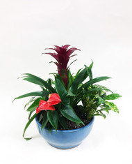 a mixed awesome dish garden with a variety of fun plants arranged in a beautiful pottery.