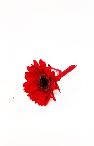All red  boutonniere designed with Gerbera Daisies. This wedding design  brought to you custom designed by Earle's Loveland!