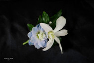 Hint of Baby Blue Boutonniere