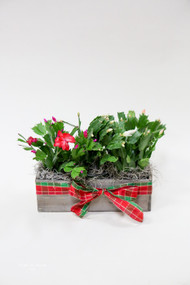 Christmas Cactus Planter