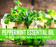 Peppermint Essential Oil Compliant Mini Online Facebook Class