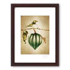 Prints : Acorn Squash, 11X14 Framed