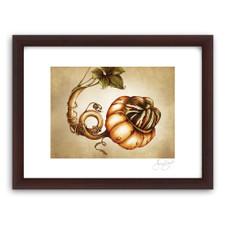 Prints : Turk Gourd, 11X14 Framed
