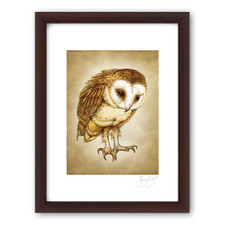Prints : Barn Owl, 11X14 Framed