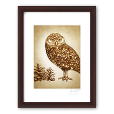 Prints : Burrowing Owl, 11X14 Framed