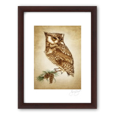 Prints : Screech Owl #1, 11X14 Framed