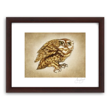 Prints : Screech Owl #2, 11X14 Framed