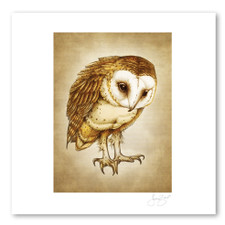 Prints : Barn Owl, 11X14 Unframed