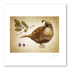 Prints : Quail #4, 11X14 Unframed