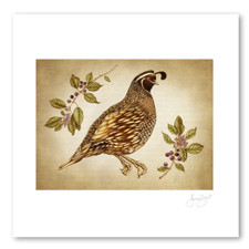 Prints : Quail #1, 11X14 Unframed
