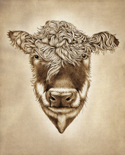 Prints : Hereford Cow, 8X10 Unframed
