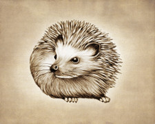 Prints : Hedgehog #2, 8X10 Unframed