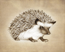 Prints : Hedgehog #1, 8X10 Unframed