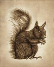 Prints : Squirrel 8X10 Unframed