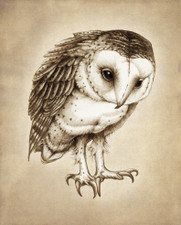 Prints : Barn Owl 8X10 Unframed