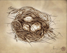 Prints : Quail Nest 8X10 Unframed