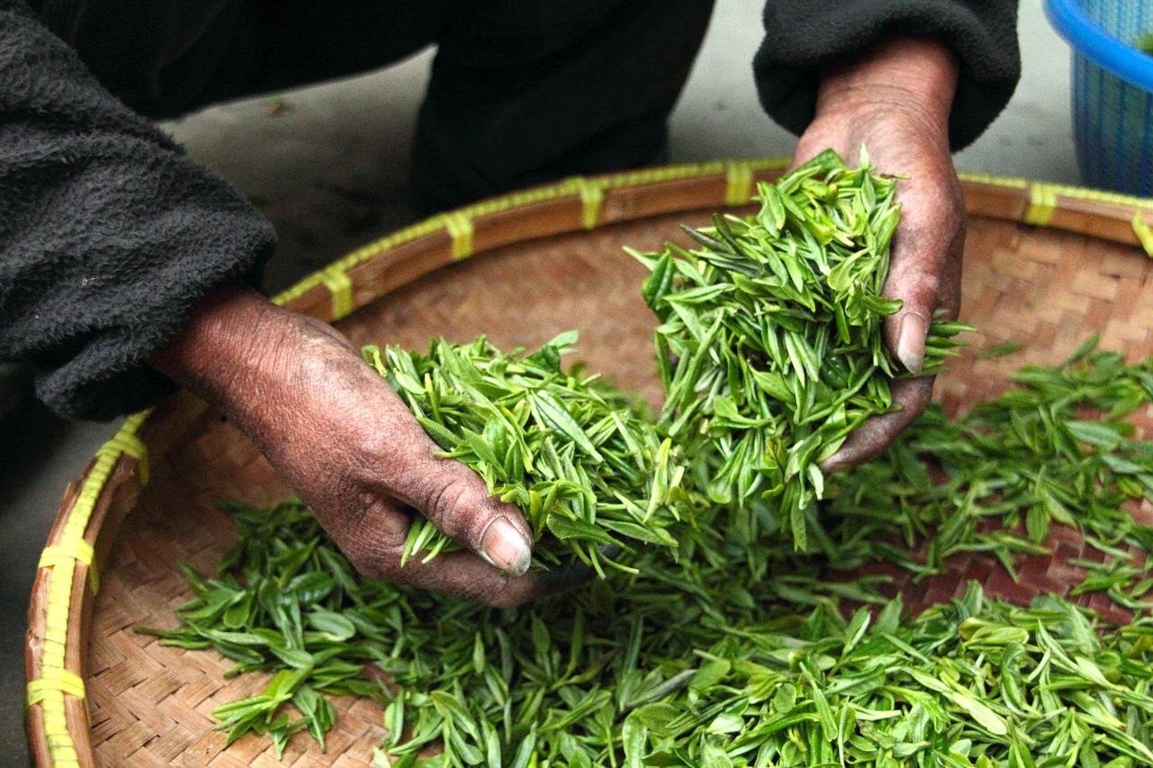 Tea Decaffeination Process