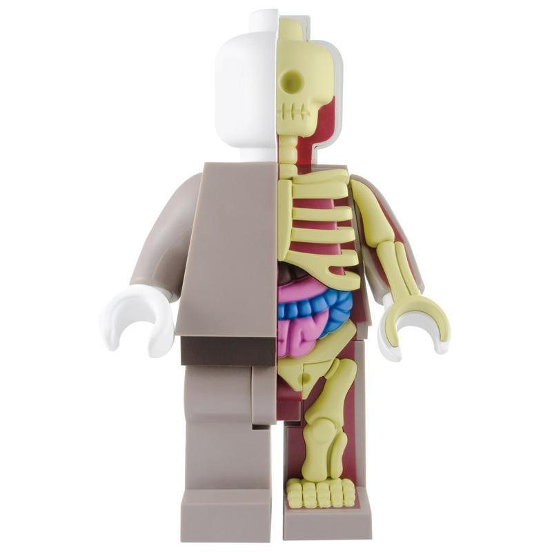 Bigger Micro Anatomic : Red