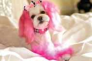 Princess Pink Bow Wall Graphic