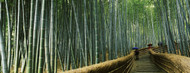 Standard Photo Board: Walkway Bamboo Forest Kyoto - AMER