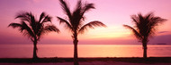 Standard Photo Board: Palm Trees on Miami Beach at Dusk - AMER