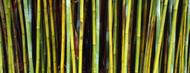 Standard Photo Board: Bamboo Trees - AMER