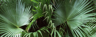 Standard Photo Board: Palm Leaves - AMER
