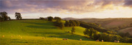 Extra Large Photo Board: Sheep Grazing Devon - AMER