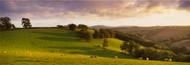 Extra Large Photo Board: Sheep Grazing Devon - AMER