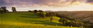 Extra Large Photo Board: Sheep Grazing Devon - AMER - INDY