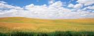 Standard Photo Board: Wheat Field with Clouds Palouse - AMER