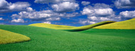 Standard Photo Board: Clouds over a Canola Field Palouse - AMER