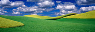Extra Large Photo Board: Clouds over a Canola Field Palouse - AMER