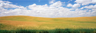 Extra Large Photo Board Wheat Field with Clouds Palouse - AMER