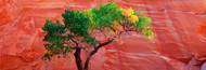 Extra Large Photo Board: Cottonwood Tree Escalante National Monument - AMER