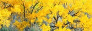 Extra Large Photo Board: Yellow Cottonwood Tree - AMER