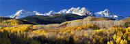 Extra Large Photo Board: Rocky Mountains Aspens in Autumn - AMER