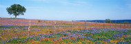 Extra Large Photo Board: Bluebonnets in Hill Country Field Texas - AMER